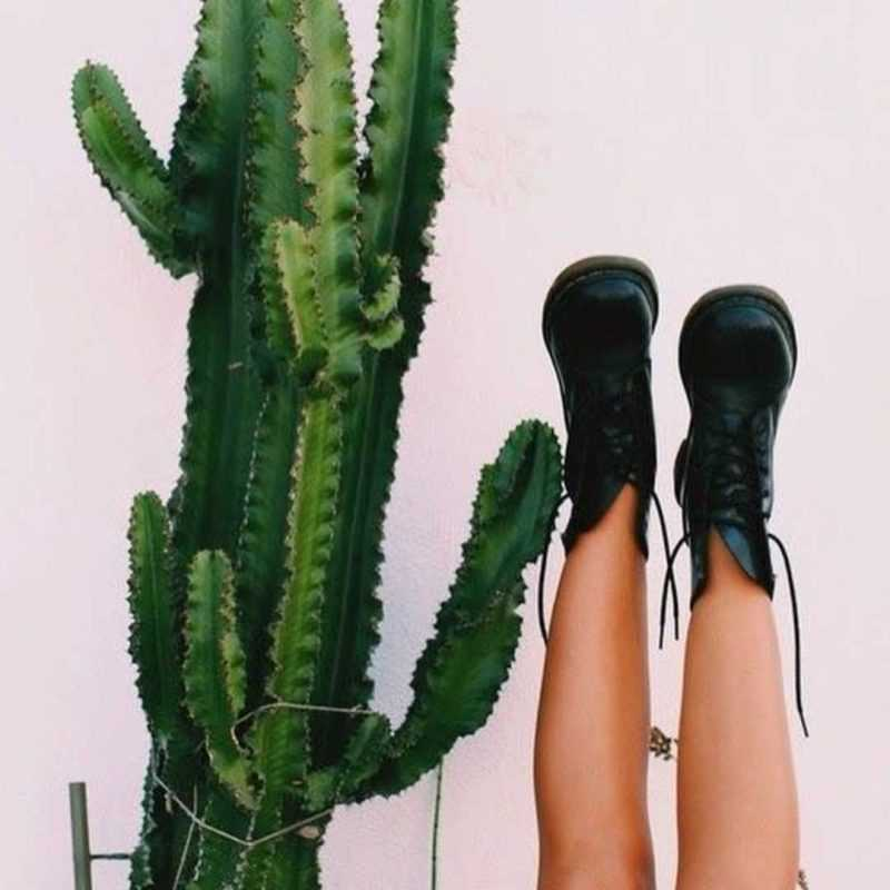 ноги с кактусом
